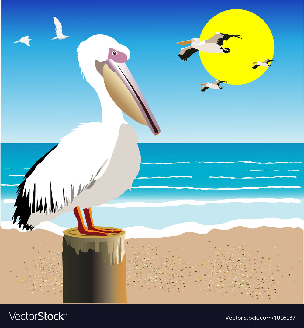 Pelican Watch vector image