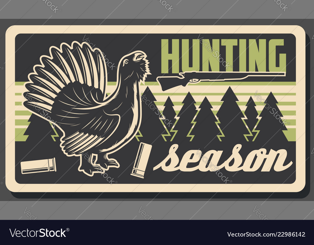 Wood grouse or capercaillie bird hunting sport