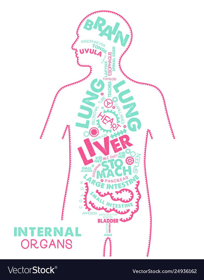 Internal organs typographic artwork internal