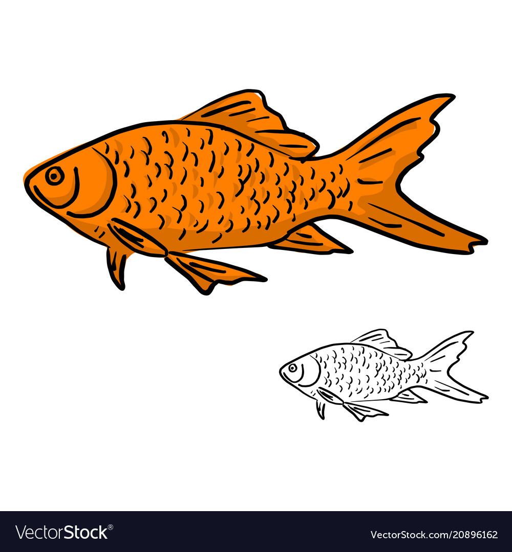 Orange fish sketch doodle hand vector image