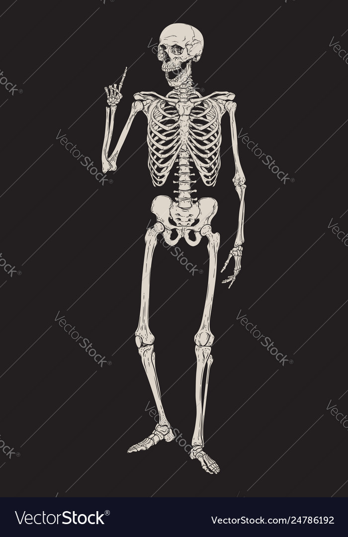 Human skeleton posing isolated over black
