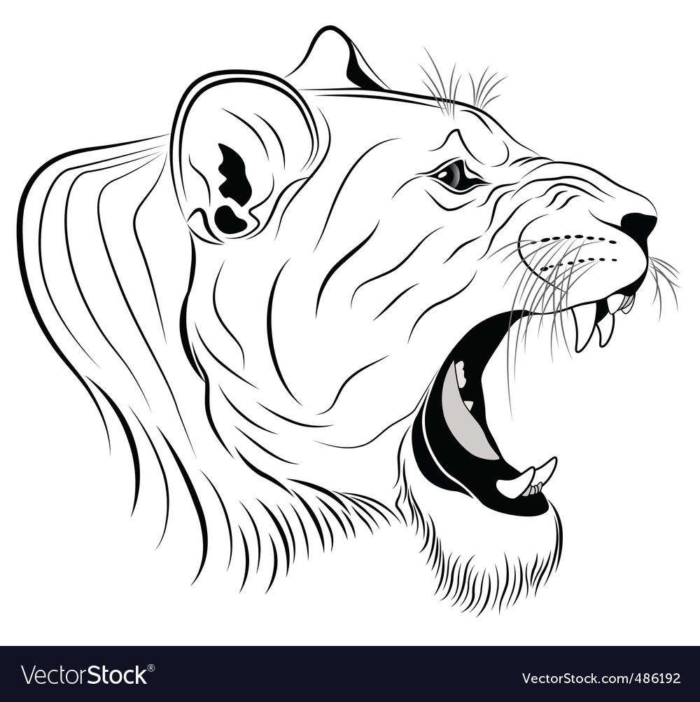 Lioness tattoo vector image