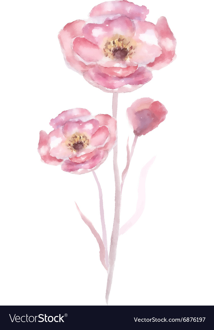 Pink Watercolor Flower Royalty Free Vector Image