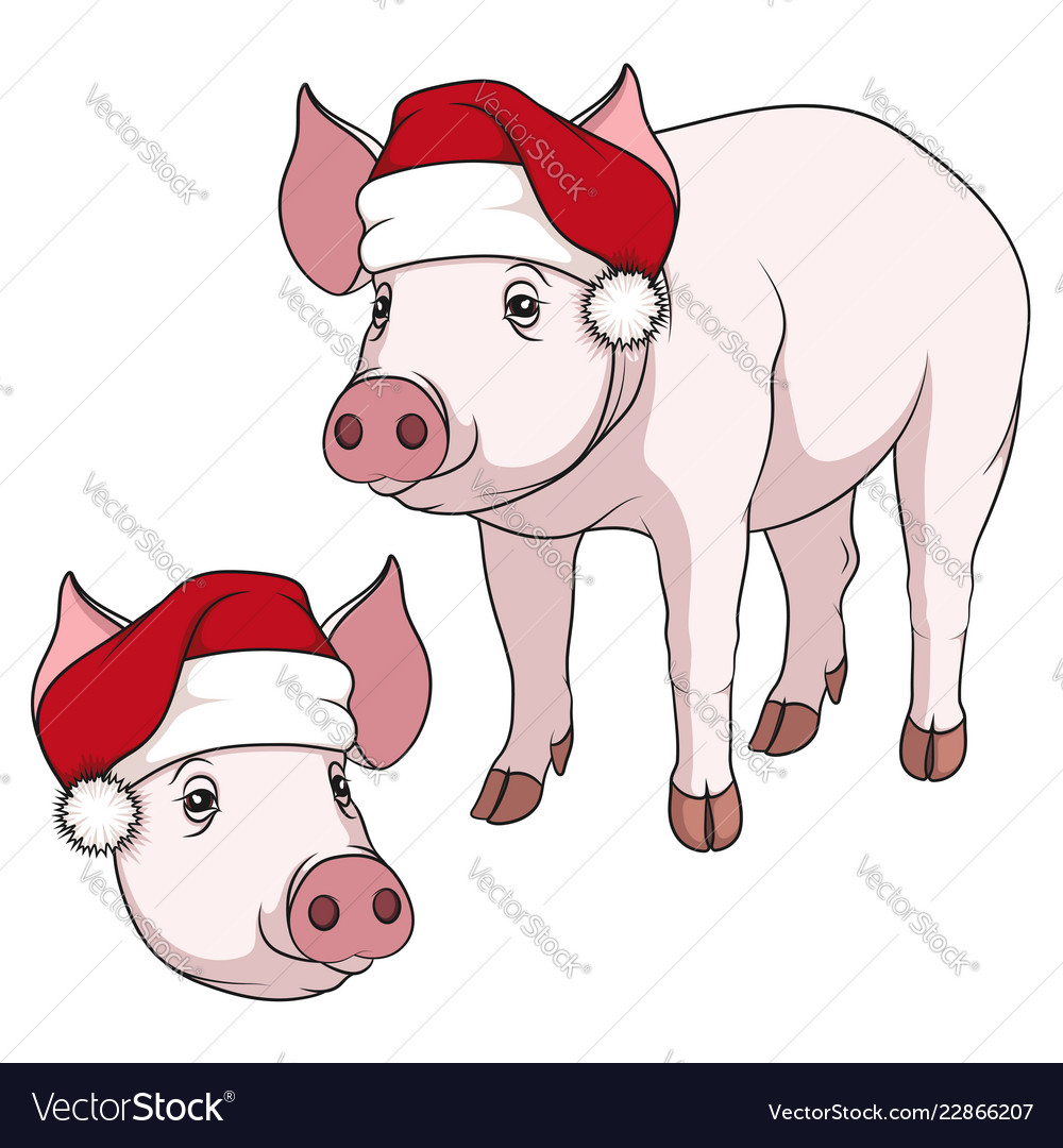 Color a pig in a christmas hat