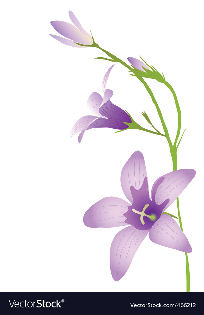 Purple bluebell vector image