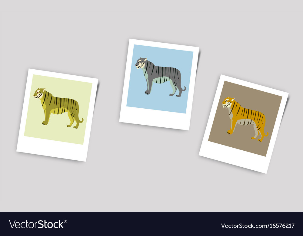 Polaroid photo of tigers vector image