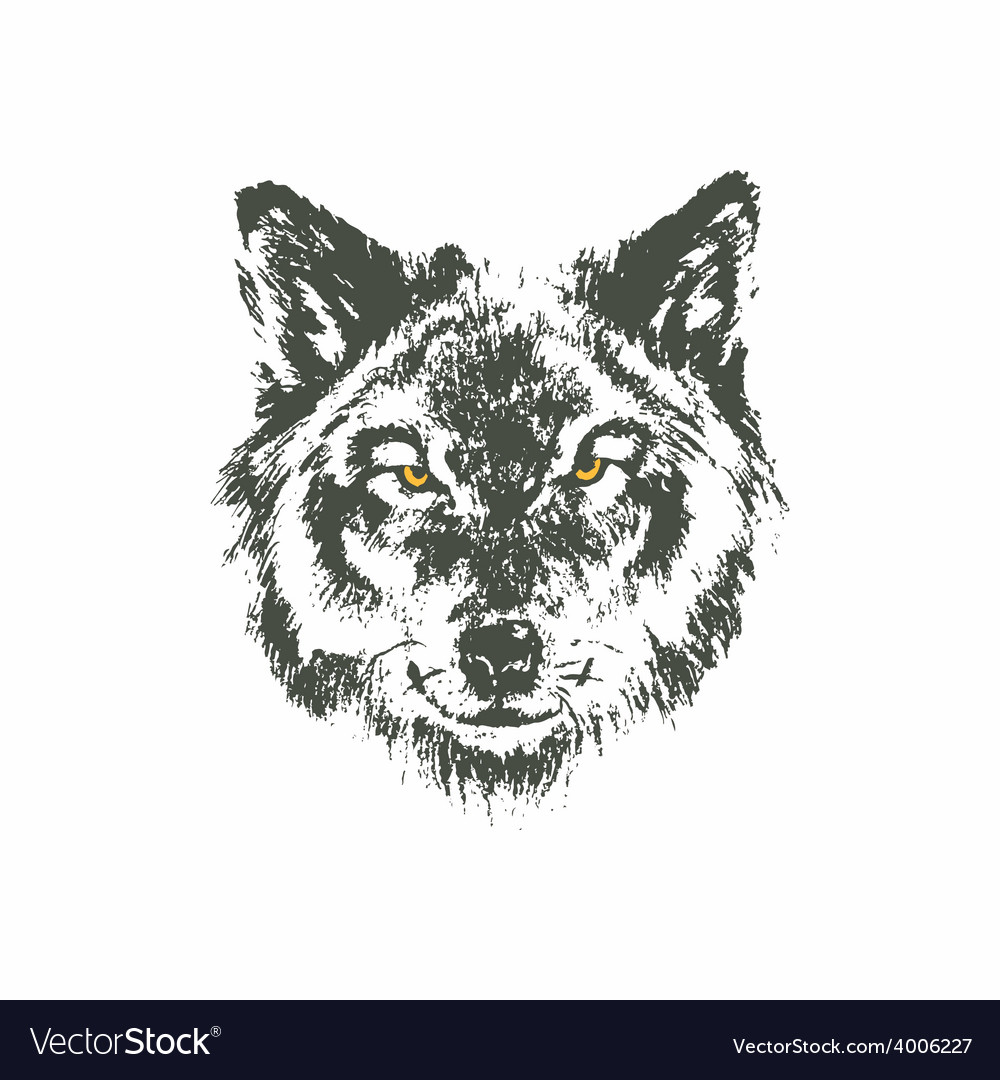 hand drawn wolf sketch on white background vector image