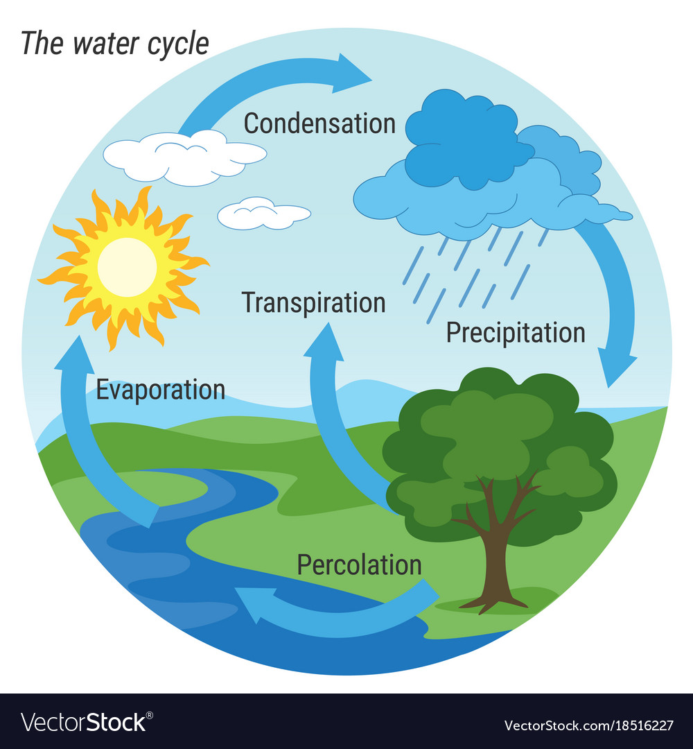 water cycle images Water cycle colour Royalty Free Vector Image - VectorStock
