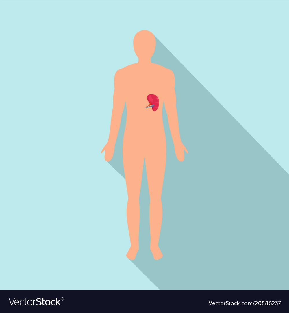 Front view of human spleen icon flat style