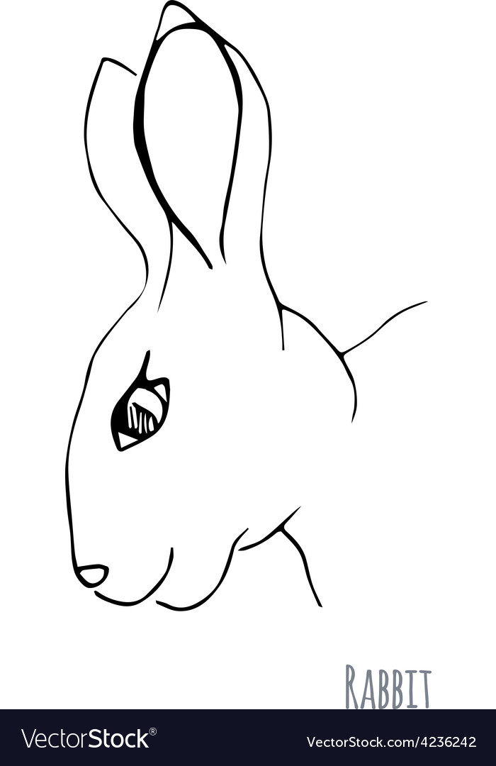 Sketch of a rabbit