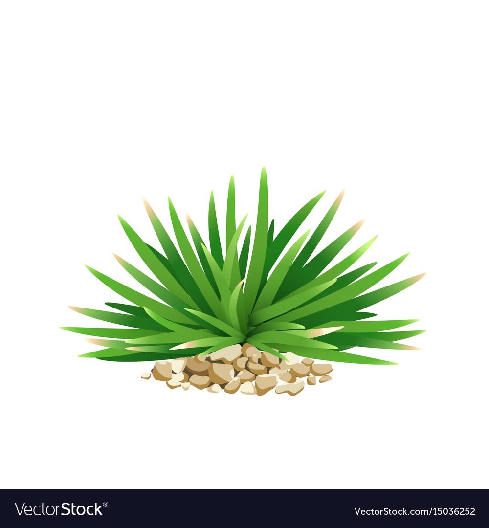 Mini mondo grass with small stone vector image
