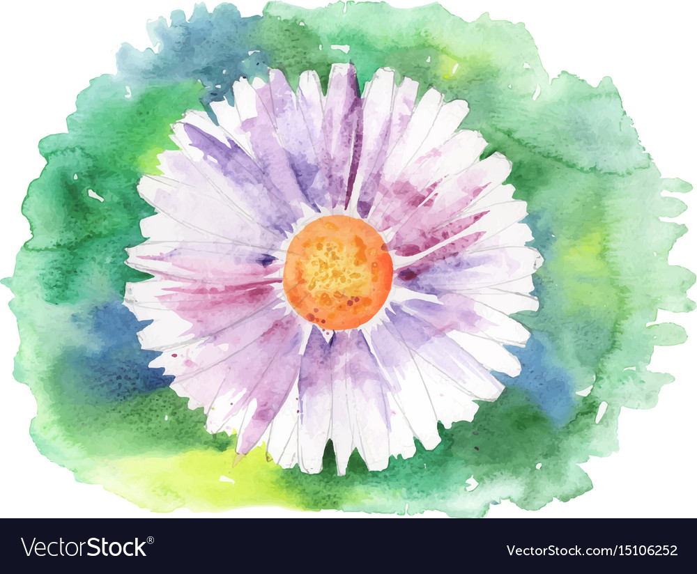 Painted daisy