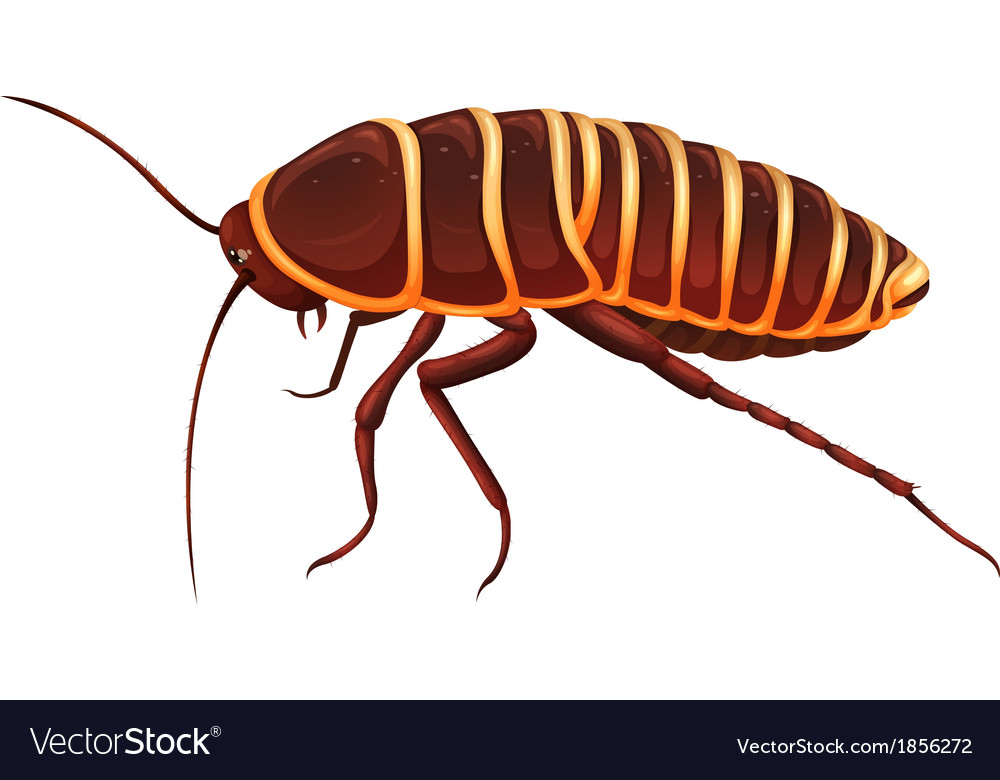 Cockroach & Life Vector Images (30)