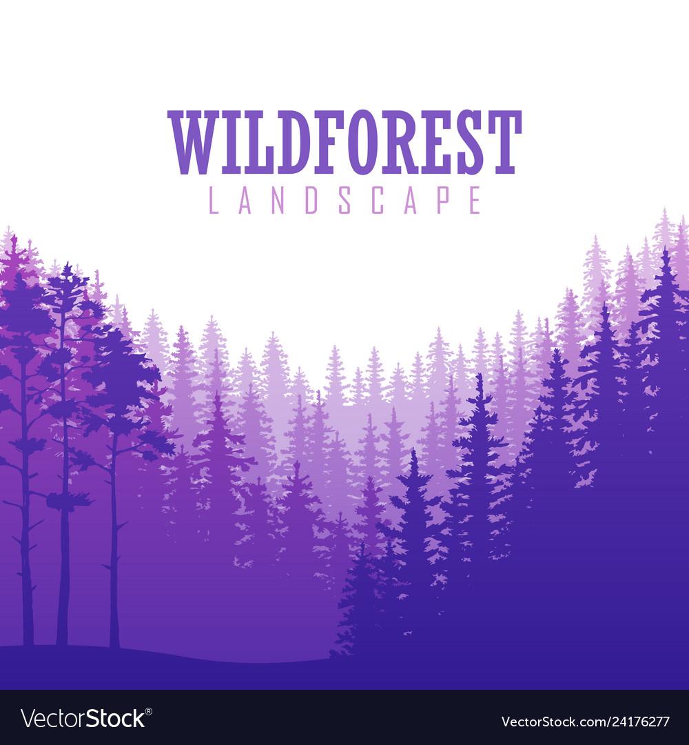 Wild coniferous forest background pine tree