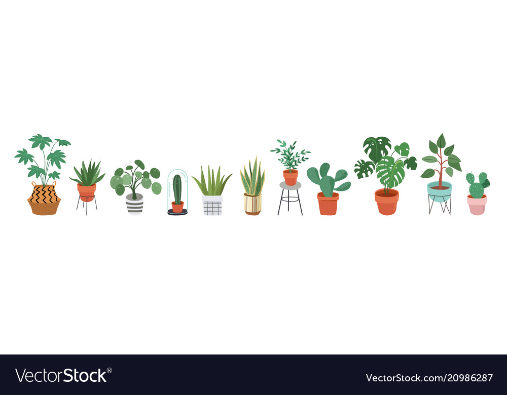 Urban jungle trendy home decor with plants