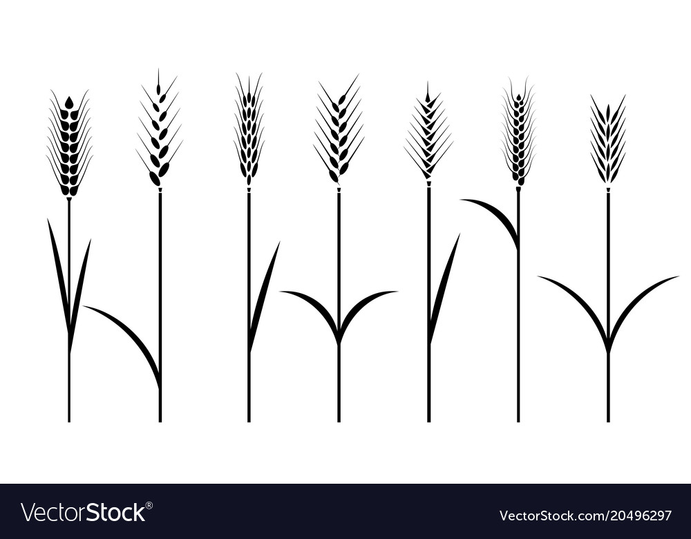 Wheat field cereals icon set with rice wheat