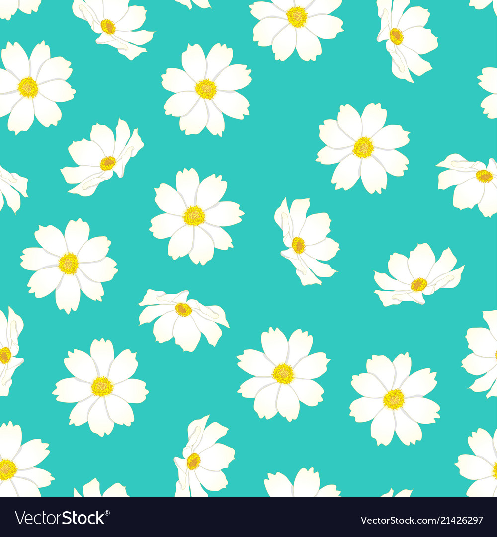 White Cosmos Flower On Blue Mint Background Vector Image