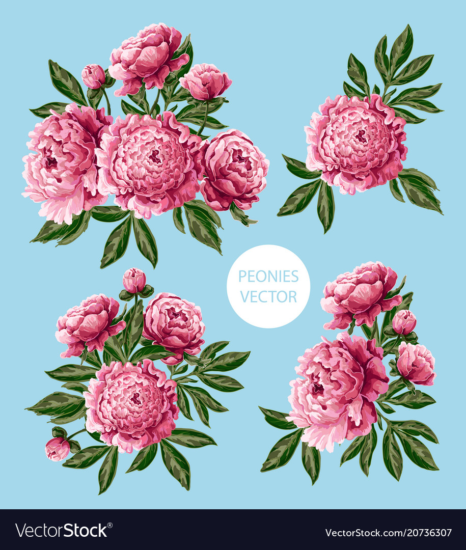 Bouquet With Pink Peonies Flowers Royalty Free Vector Image