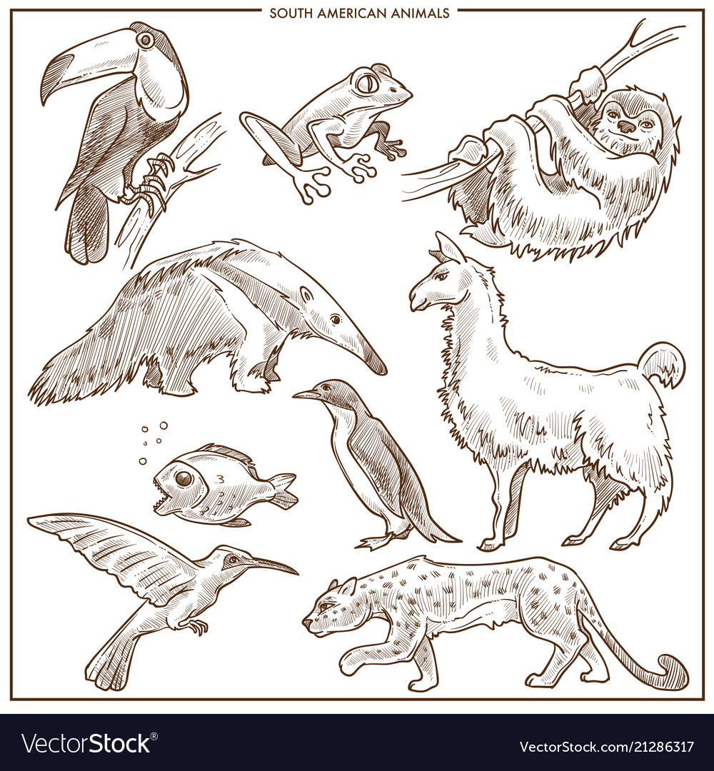 South american animals and birds sketch vector image