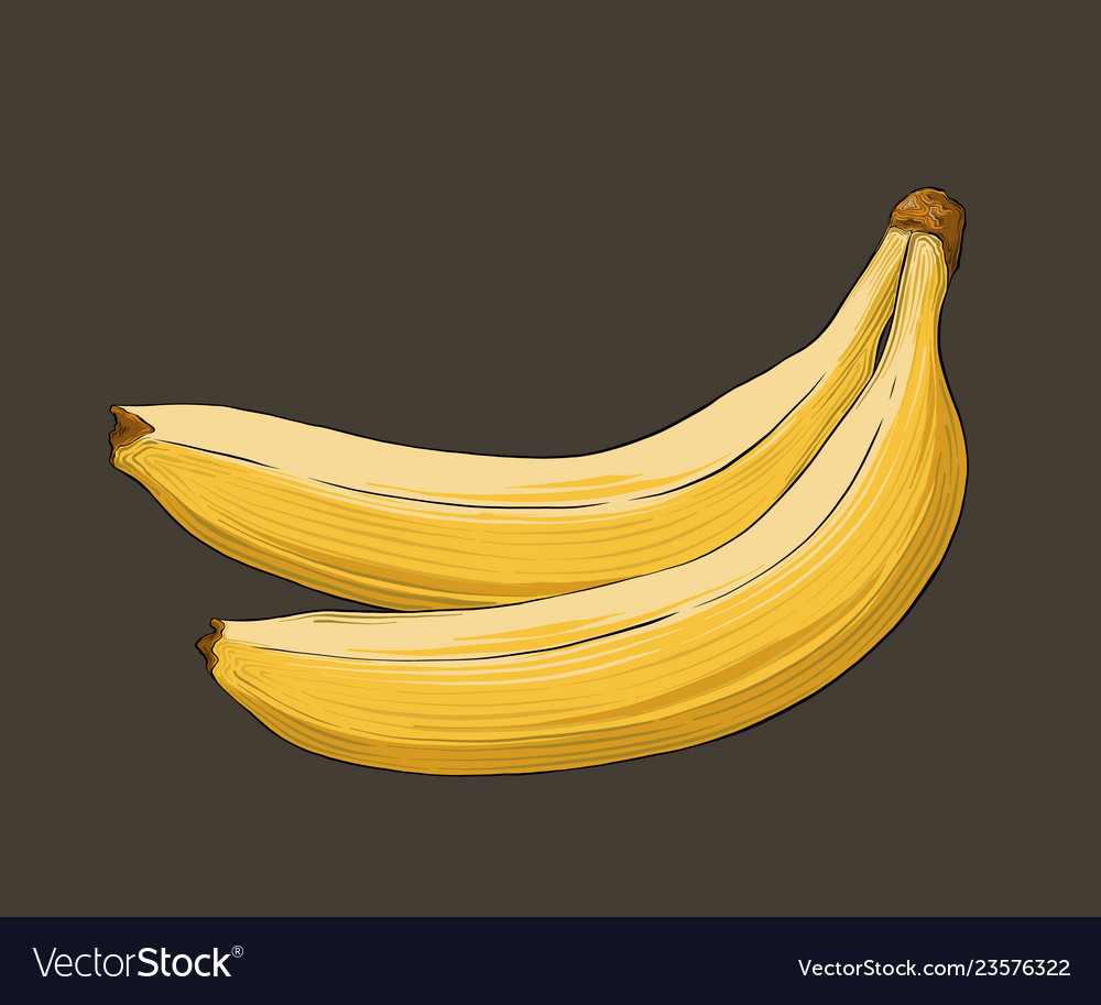 Hand drawn sketch of banana in color isolated on