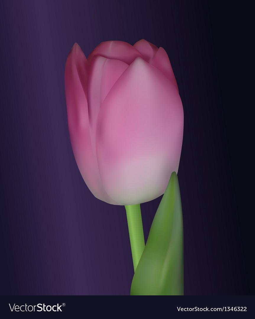 Realistic tulip