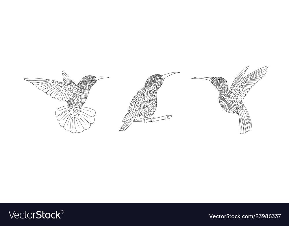 Zendoodle bird hand-drawn humming-bird with hand