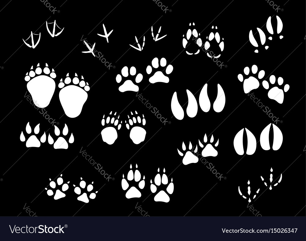 Imprint icons of animal or birds foot paws