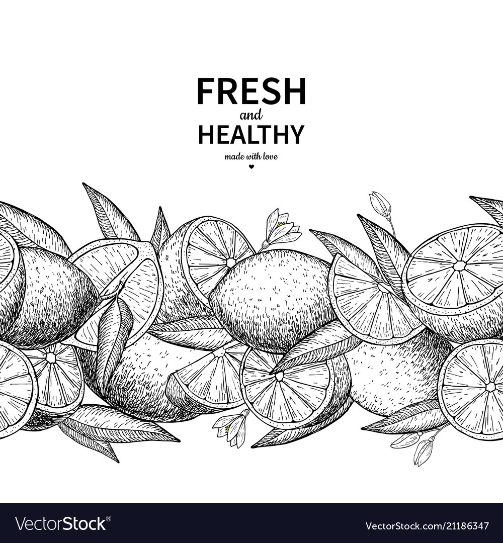 Lemon border drawing citrus fruit engraved
