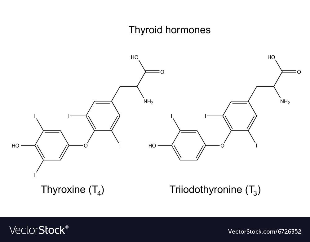 Chemical Formulas Of Thyroid Hormones Royalty Free Vector