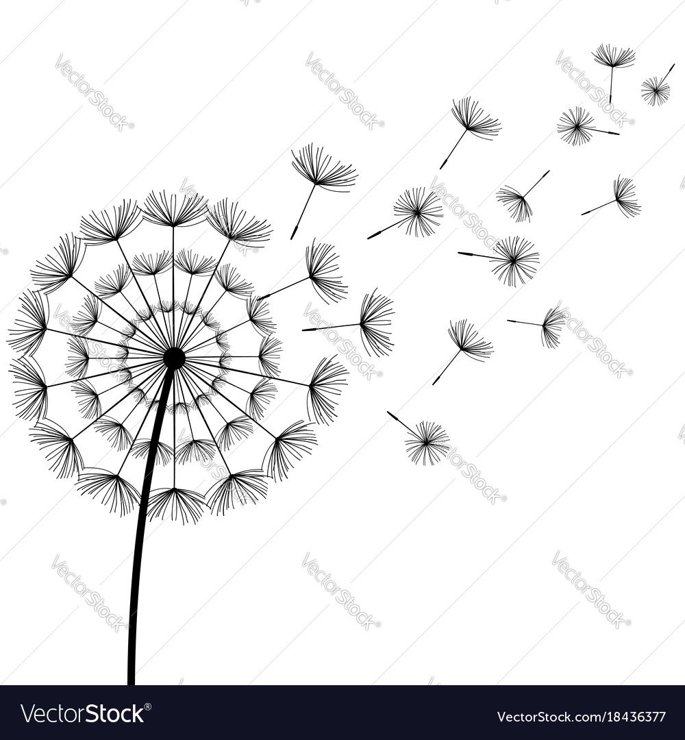 Black fluff dandelion on white background