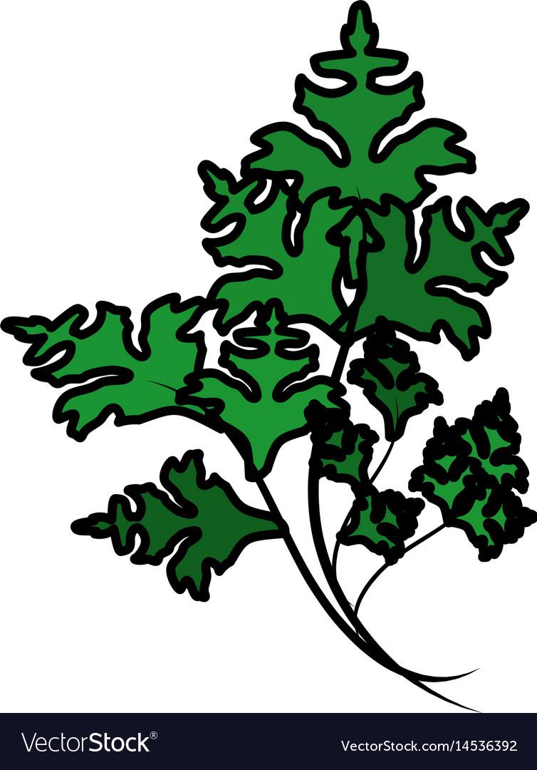 Fresh onion leaves plants healthy food