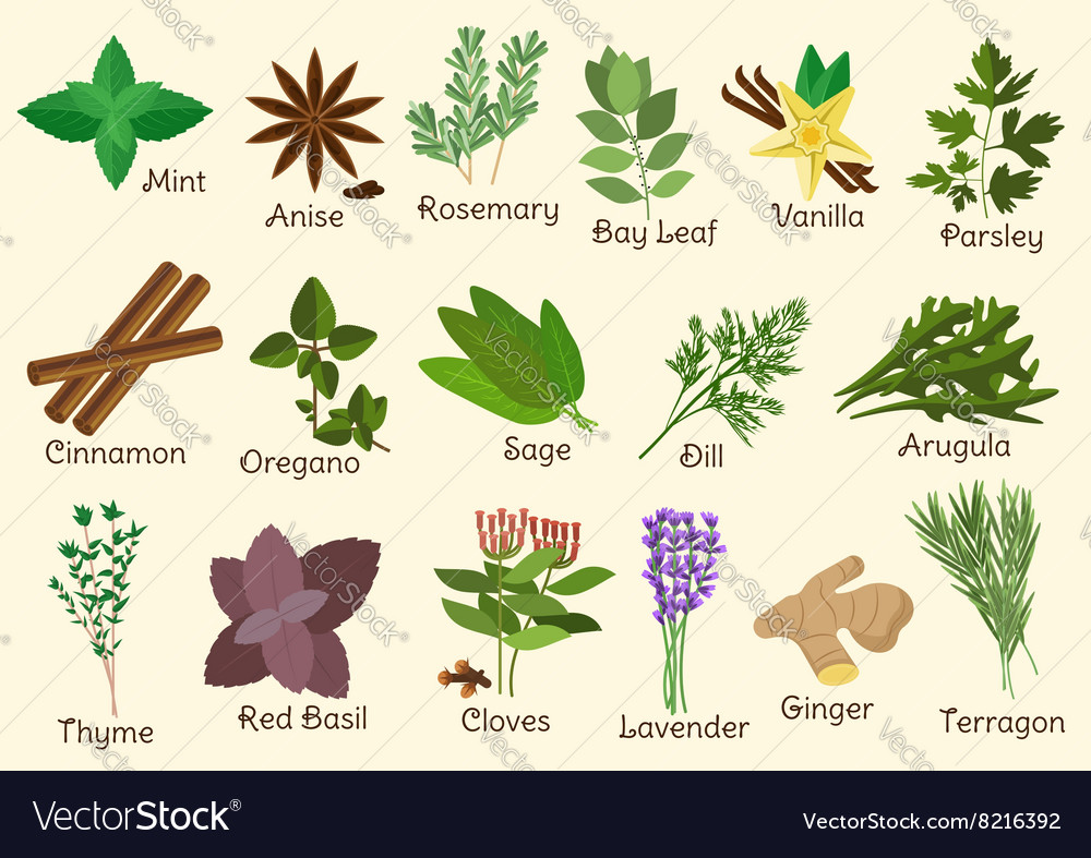 Herbs And Es Royalty Free Vector Image