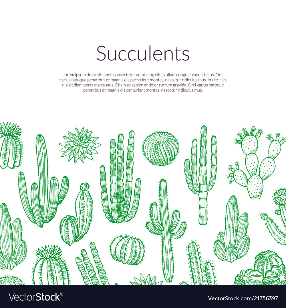 Hand Drawn Wild Cacti Plants Background Royalty Free Vector