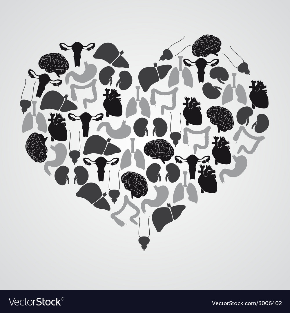 Internal human body organs in heart shape eps10 vector image