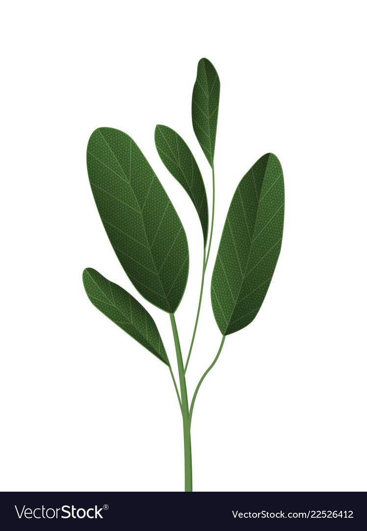 Green tropical leaves
