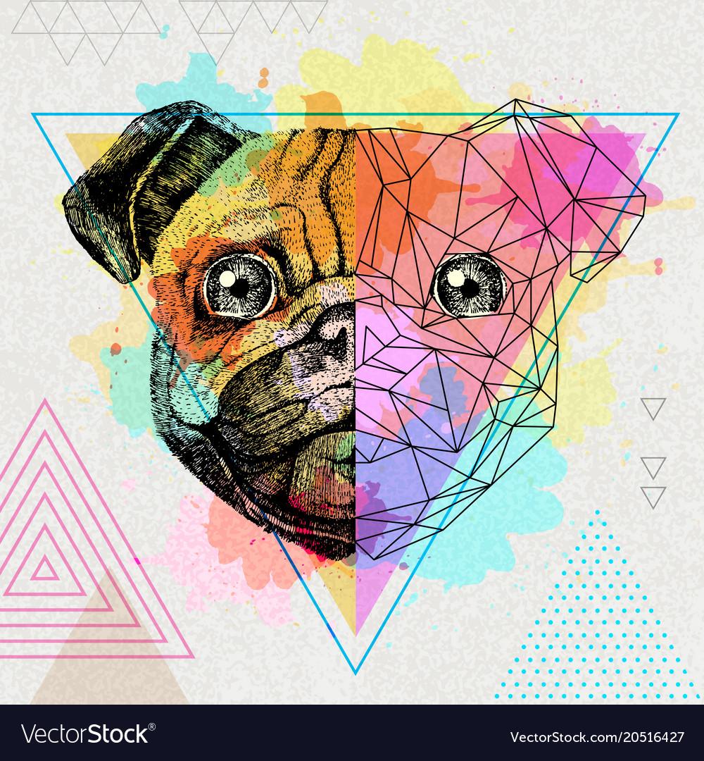 5674acb5485f Hipster animal realistic and polygonal pug-dog on Vector Image