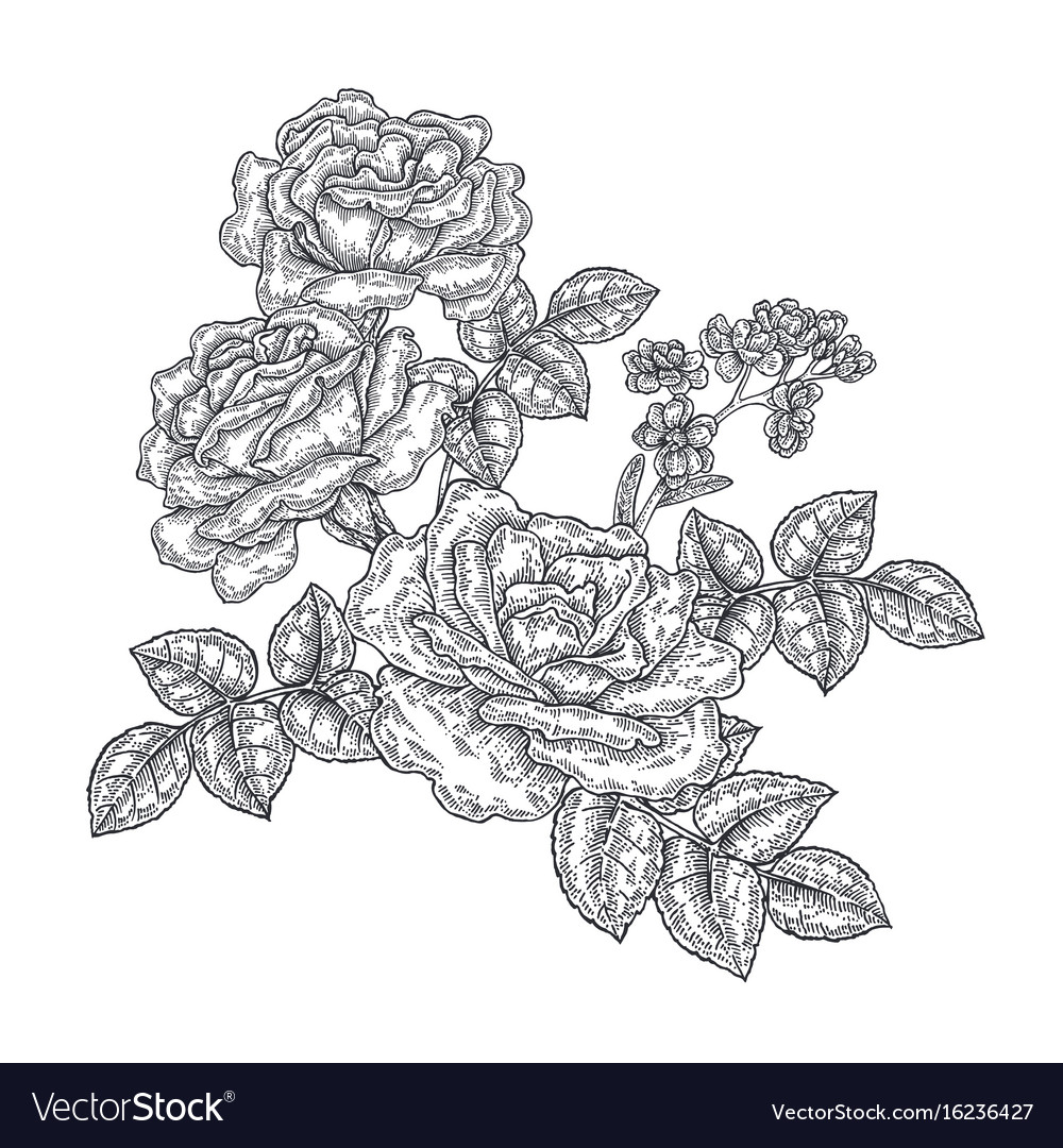 Rose flowers and leaves in vintage style hand