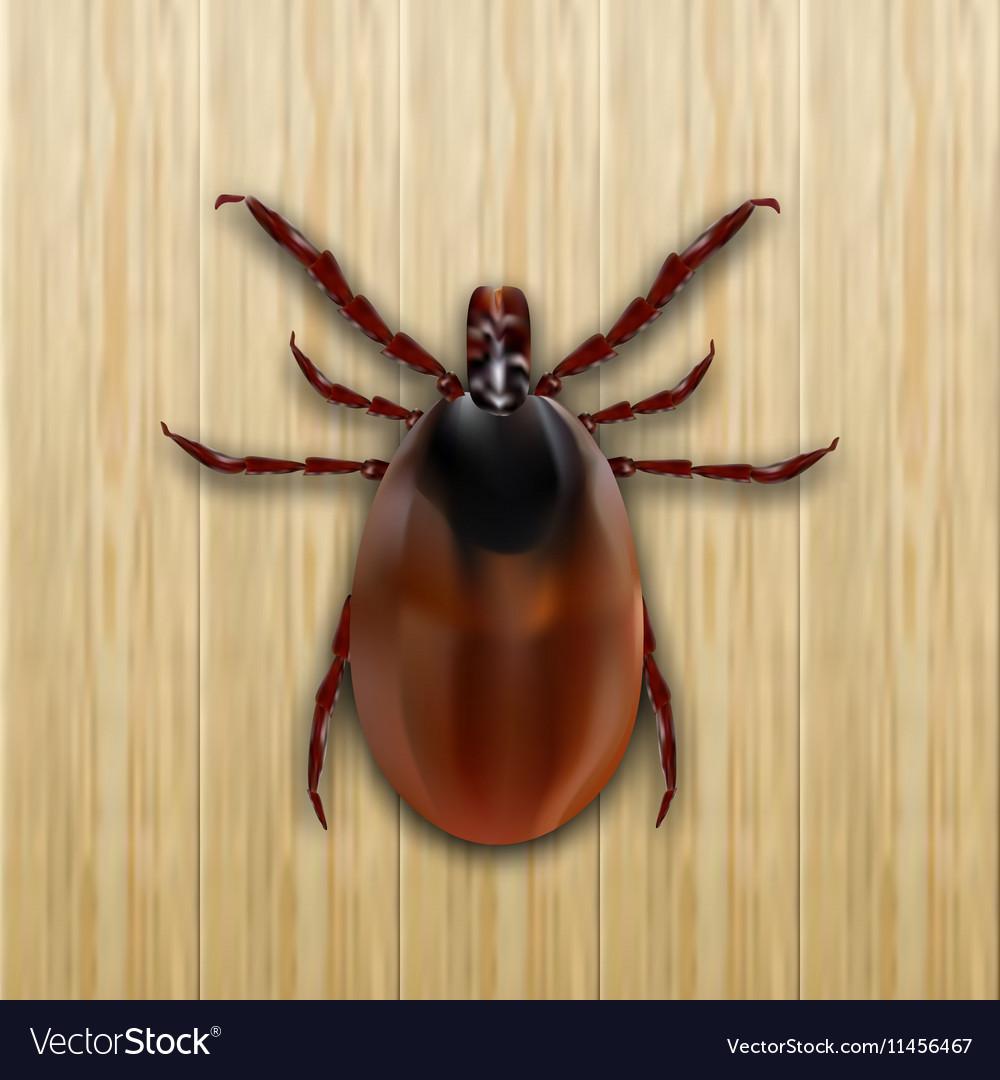 Red mite Mite allergy Epidemic Mite parasites