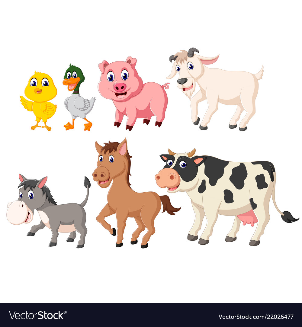 Collection of the livestock animals