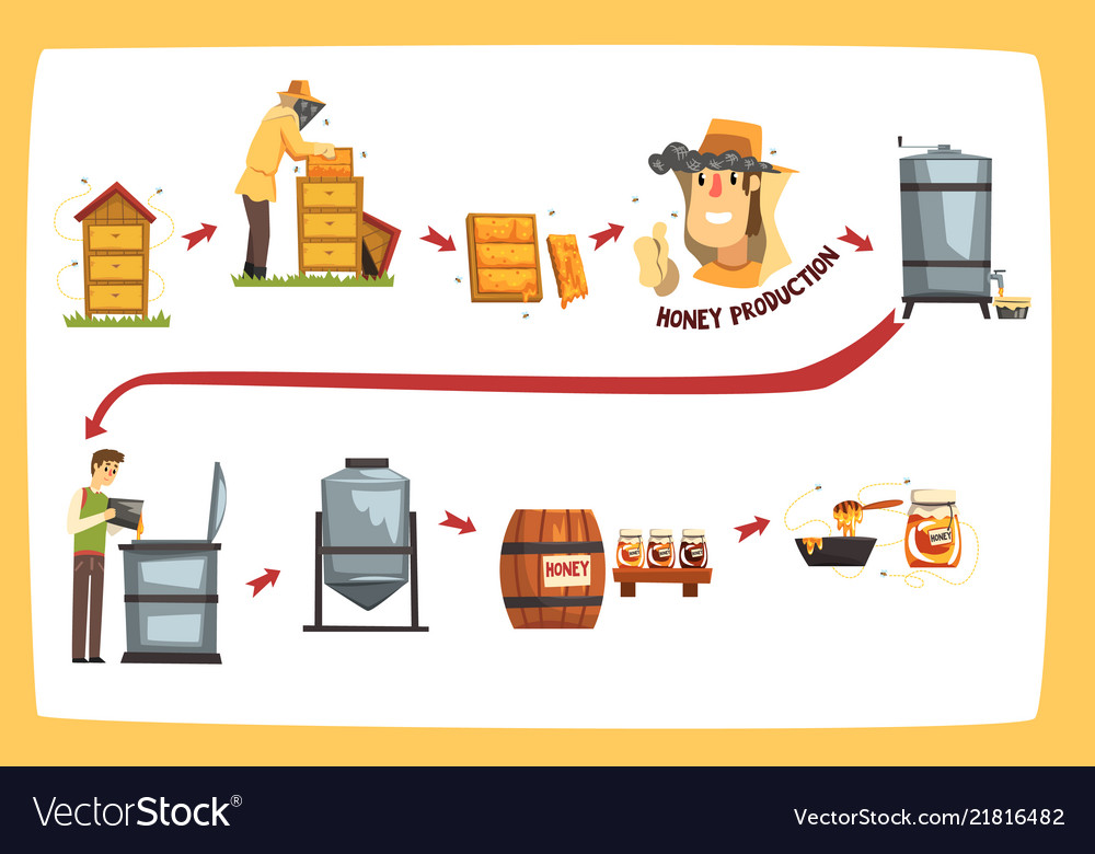 Honey production process stages beekeepers