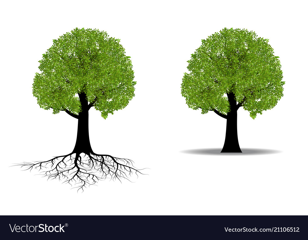 Big tree with root vector image