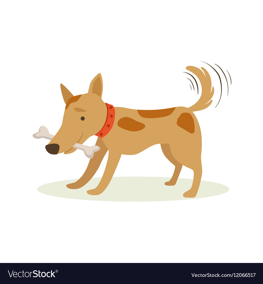 Brown Pet Dog Carrying Bone In Teeth Animal vector image