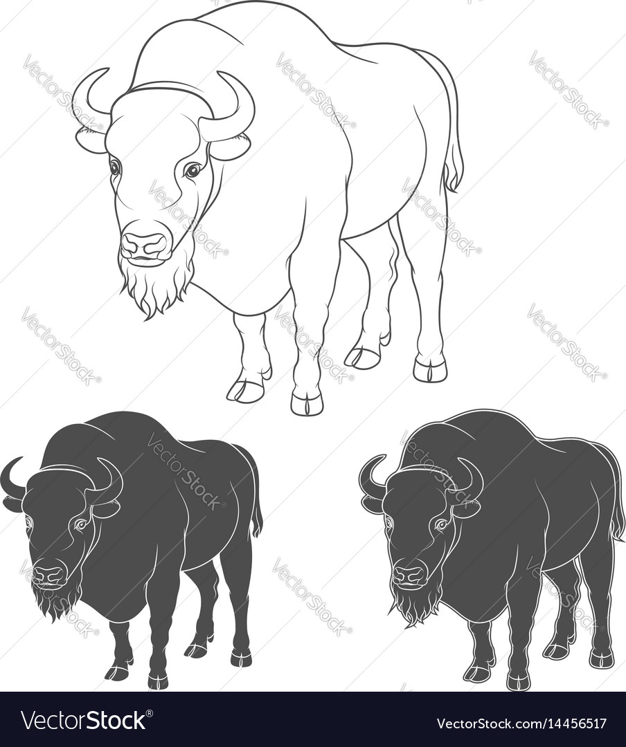 Set of black and white images with a bison