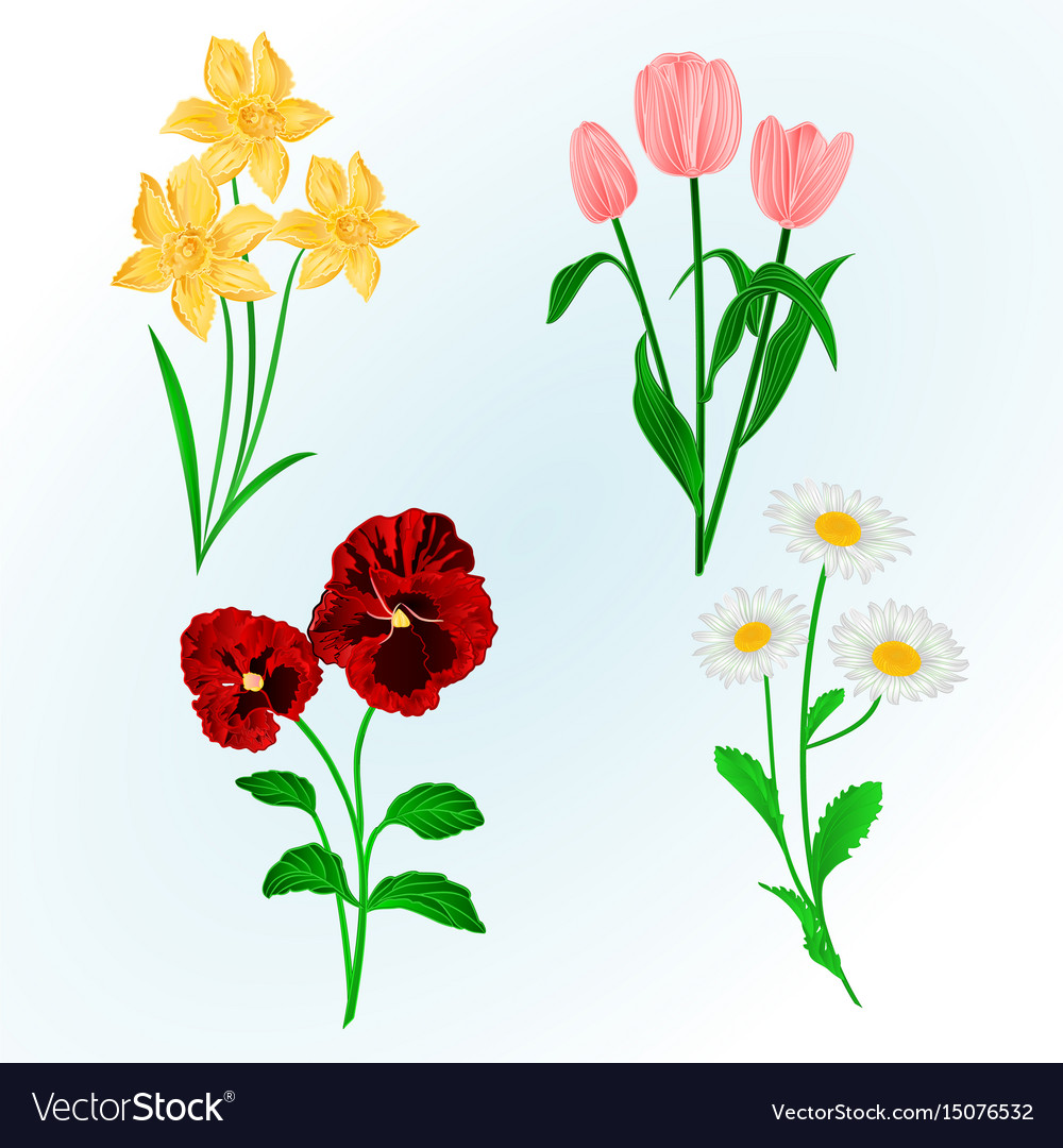 Spring Flowers Daffodils Pansies Tulips Royalty Free Vector