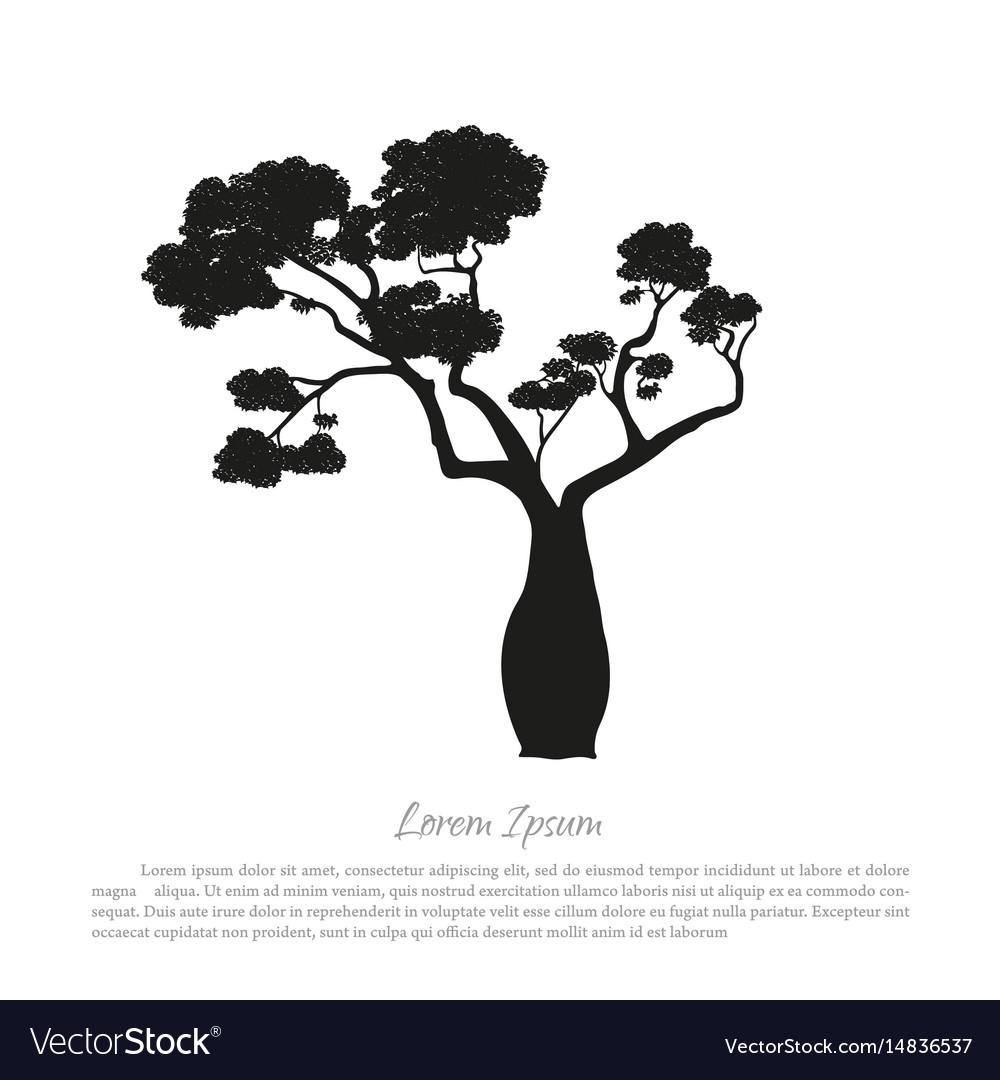 Black silhouette of a baobab on a white background