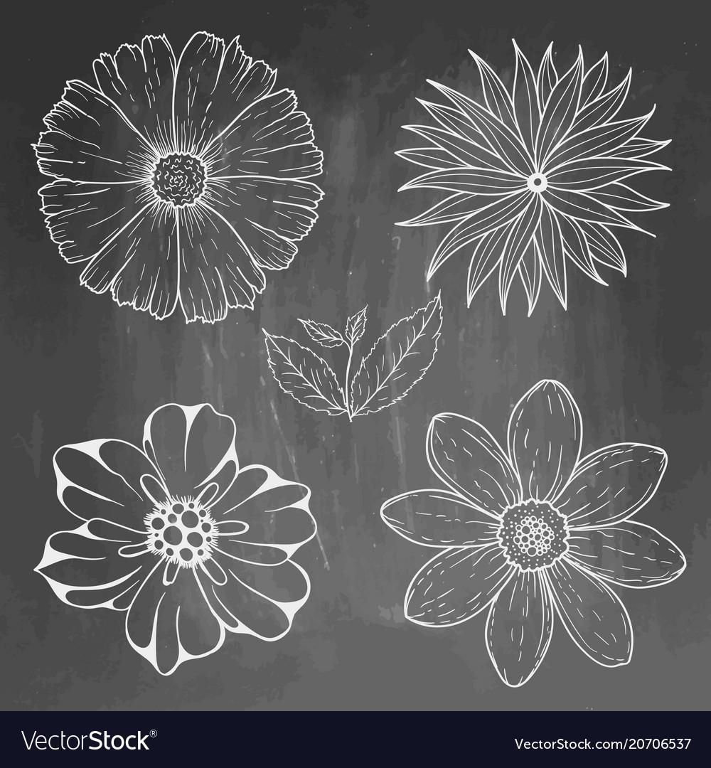 Hand drawn vintage floral elements on blackboard