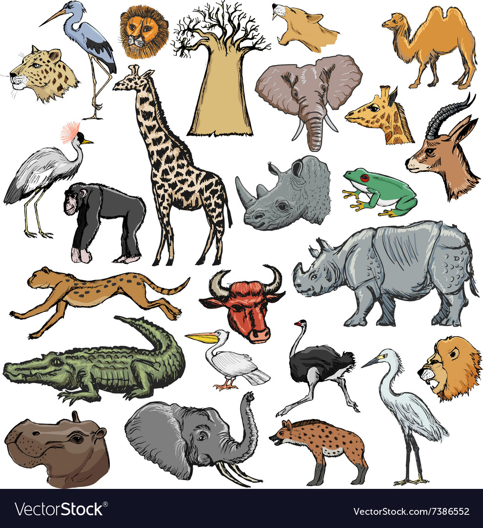 Set of African animals Royalty Free Vector Image