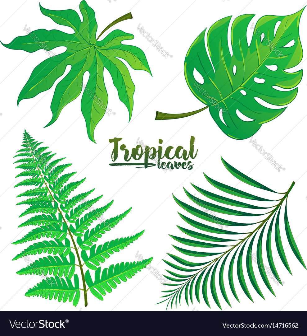 Set of tropical palm leaves isolated on