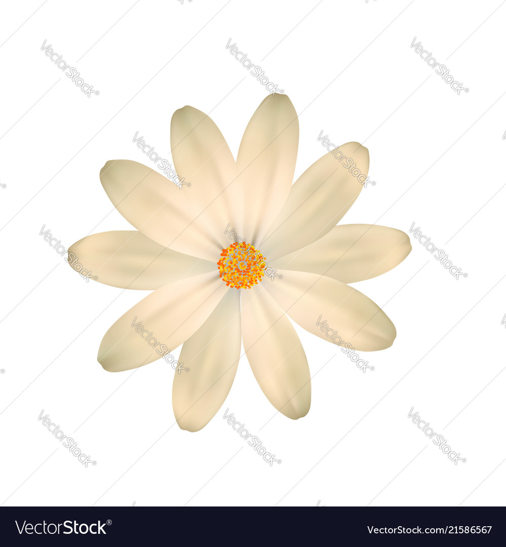 Almost white light yellow flower one isolated
