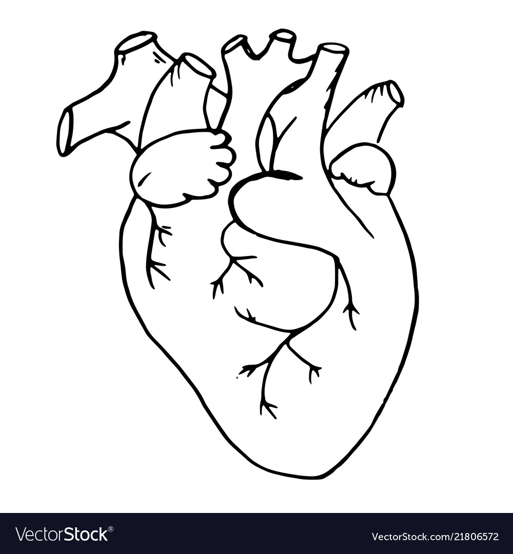 Doodle the human heart drawn with